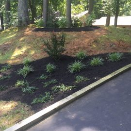 front by street- landscaping