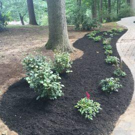 frontyard- landscaping