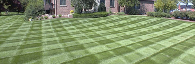 lawn 2- checker boxes- landscaping